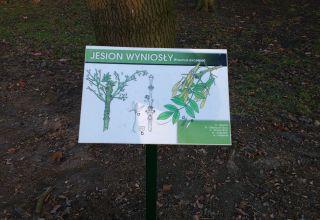 Rewitalizacja zabytkowego Parku Miejskiego w Głogówku